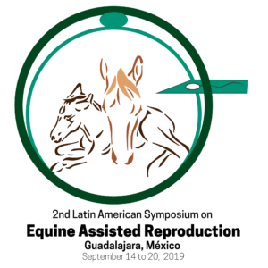 Embryo transfer in mares